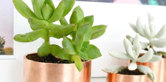 Mini-Copper-Planters 20 idées Déco: La folie du cuivre 20 idées Déco: La folie du cuivre Mini Copper Planters 640x315