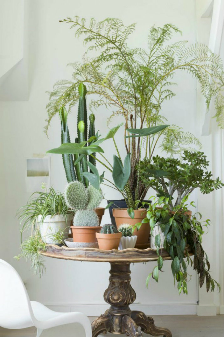 plantes plantes Été ou d'hiver, un couple de plantes n'est jamais trop   t   ou dhiver un couple de plantes nest jamais trop1