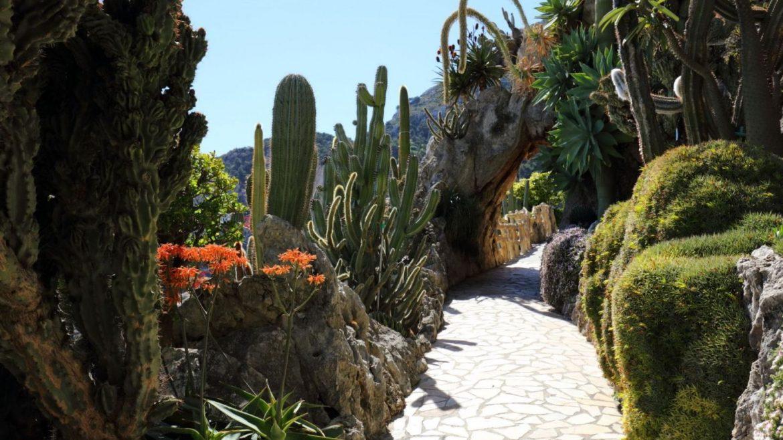Le jardin exotique de Monaco  Top 10 Des Jardins Mythiques A Découvrir ce Printemps Jardin exotiques monaco