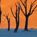 L'Afrique, une inspiration quotidienne… Namibie 120x120